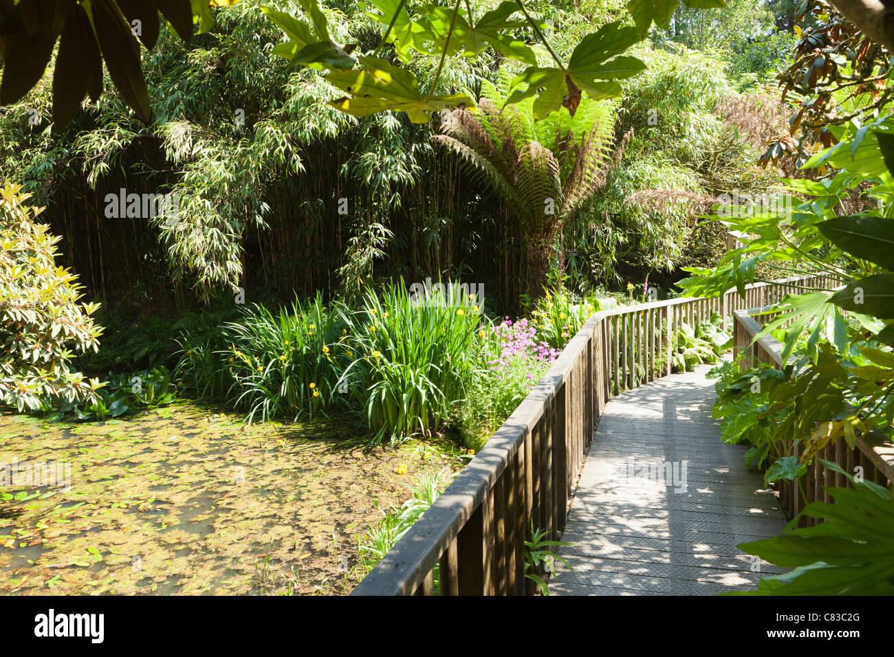 Der Dschungel an der Verlorenen Gärten von Heligan, Pentewan, St. Austell, Cornwall. Stockbild