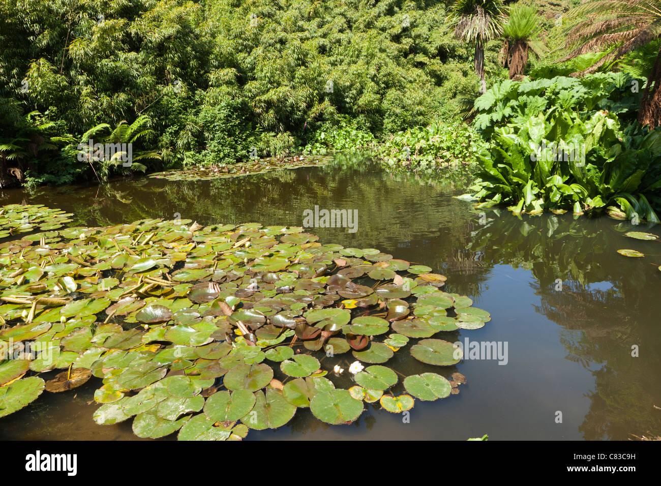 Ein Teich im Dschungel in The verloren Gardens of Heligan, Pentewan, Austell, Cornwall Stockbild