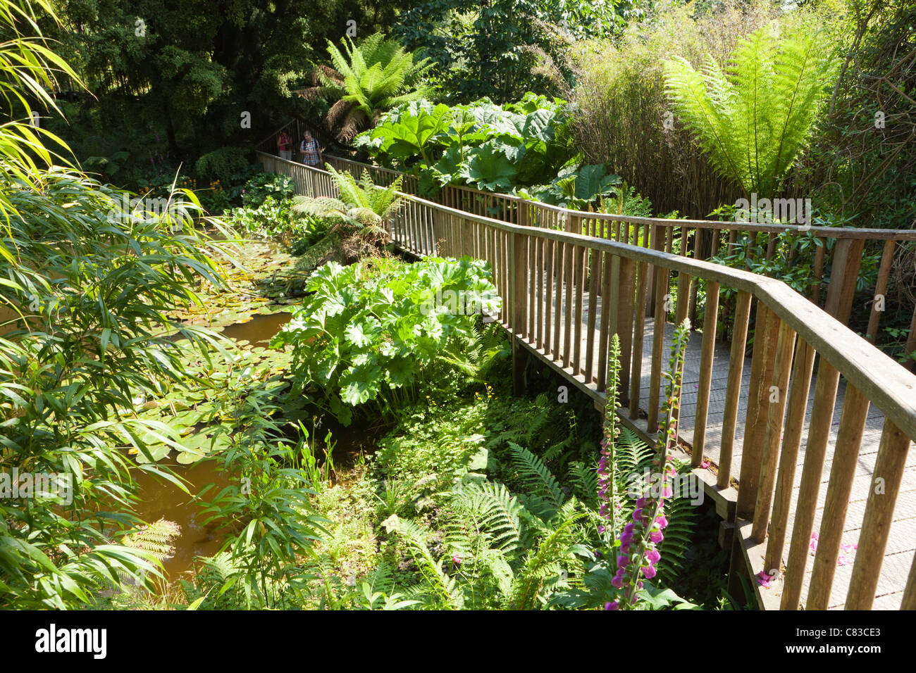 Der Dschungel an die verlorenen Gärten von Heligan, Pentewan, Austell, Cornwall Stockbild
