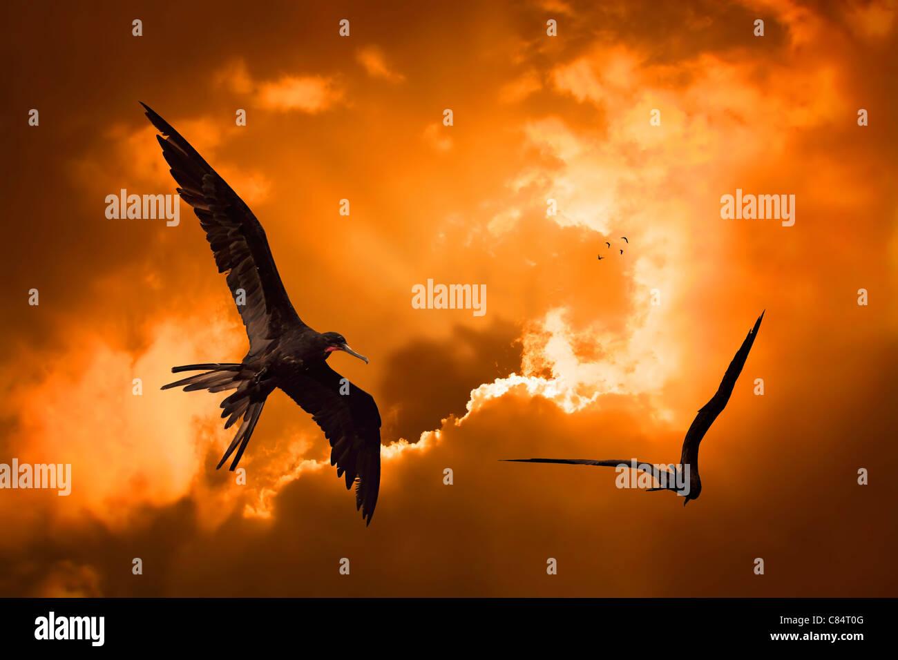 Vögel fliegen in den Sonnenuntergang auf Curacao Stockbild