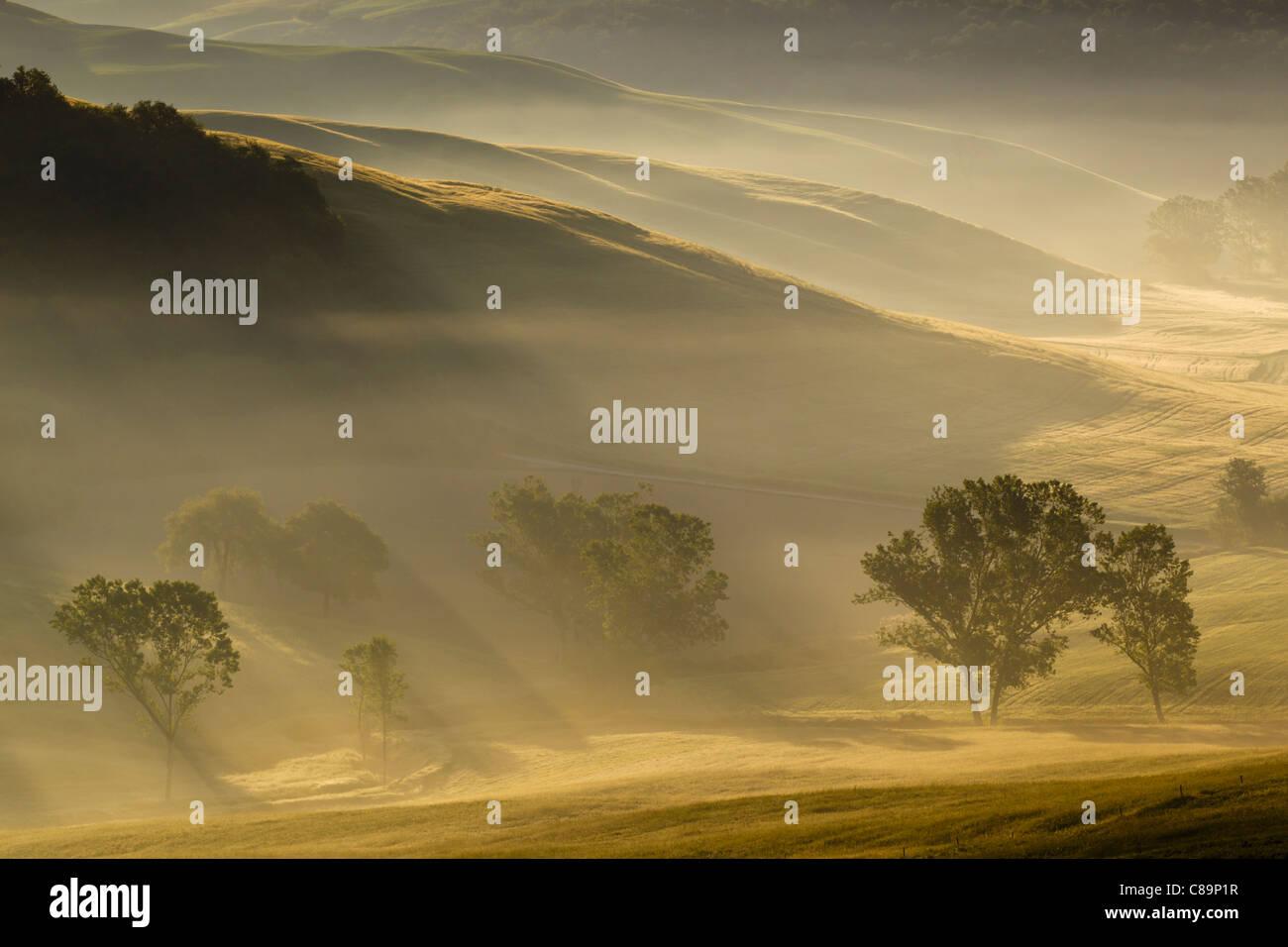Italien, Toskana, Kreta, Blick auf Bäume und Nebel in den Morgen Stockbild