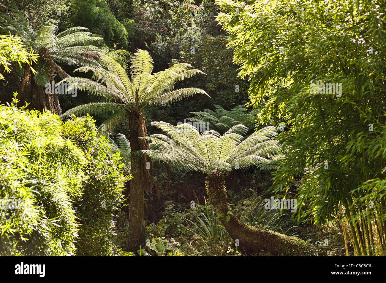 Pflanzen Im September in heligan jungle garden mit baumfarnen und anderen subtropischen
