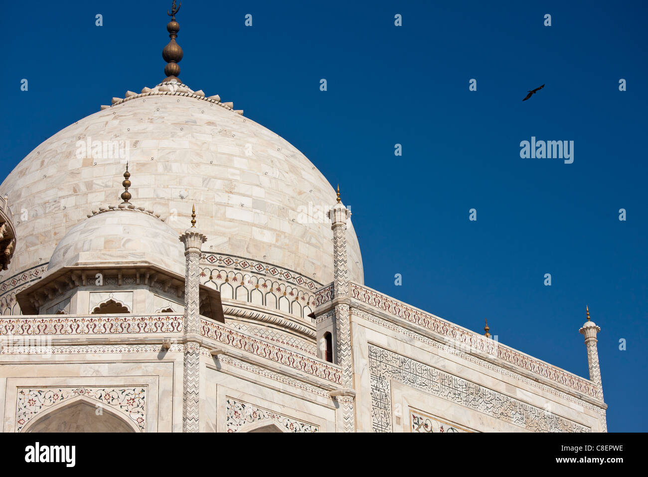 Das Taj Mahal-Mausoleum mit Vögel fliegen um die Kuppel, Südansicht Detail, Uttar Pradesh, Indien Stockbild