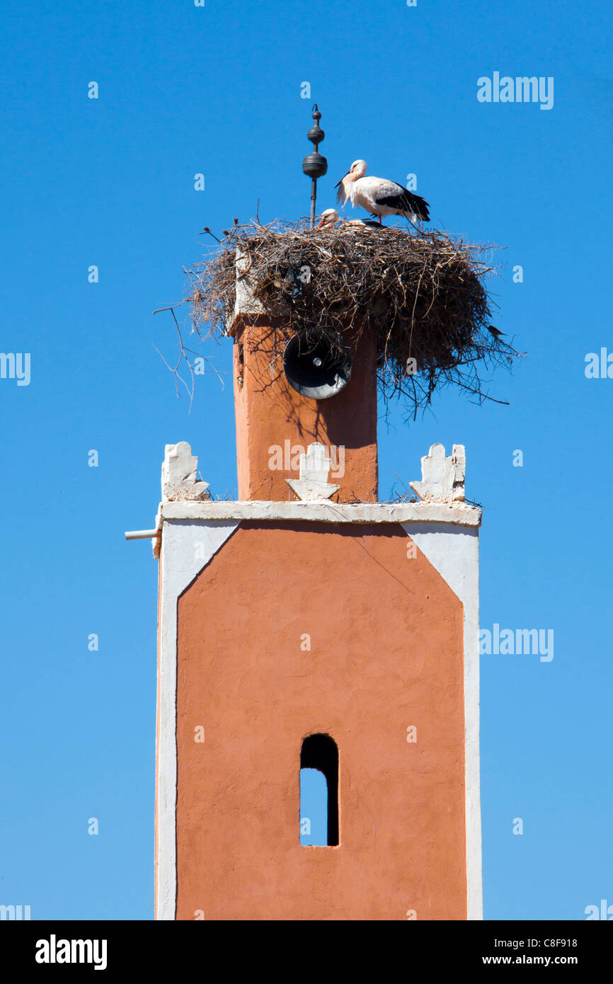 Marokko, Nordafrika, Afrika, Storch, Nest, Vogel, Minarett Stockbild