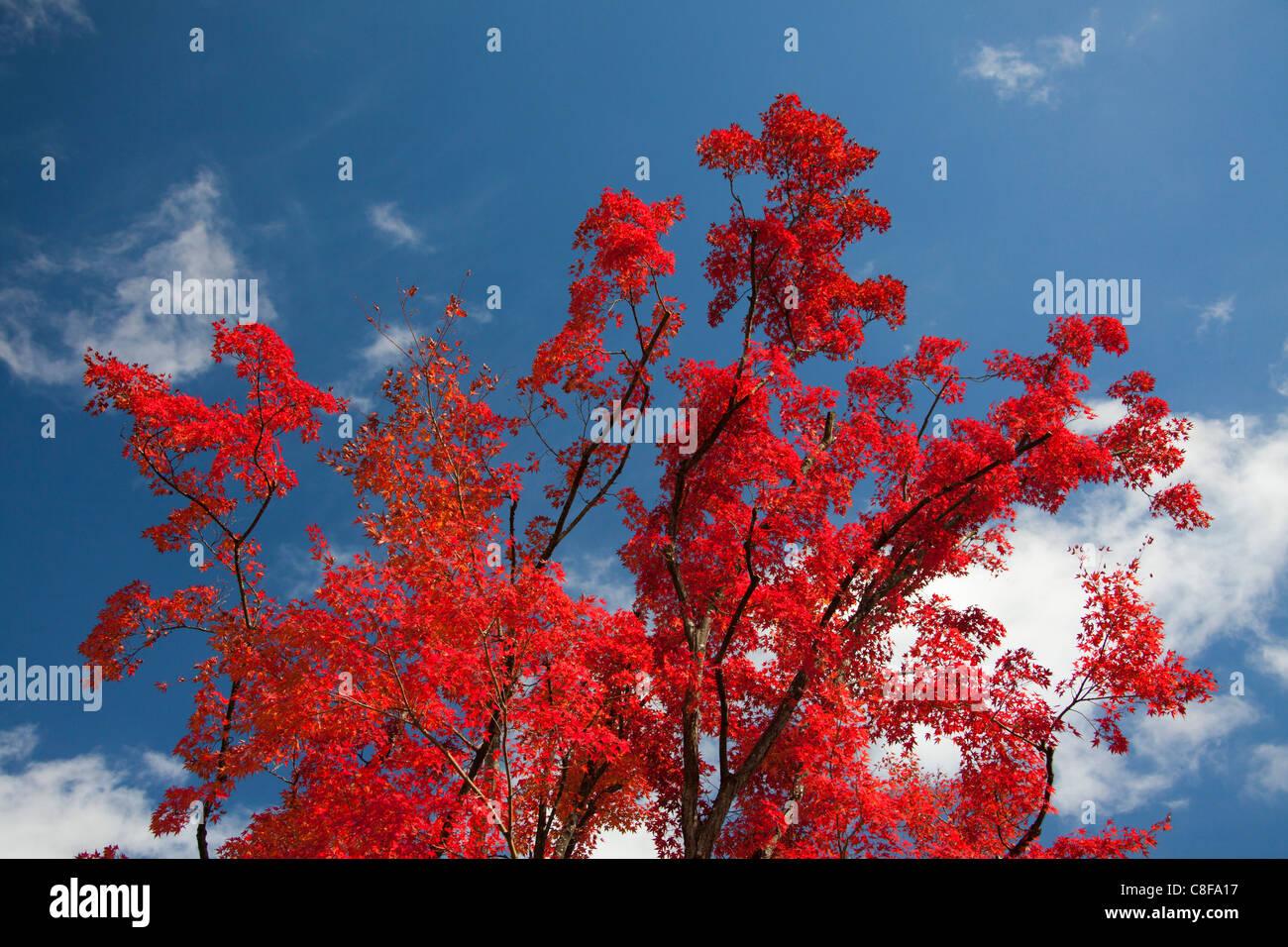 Japanisch Rot