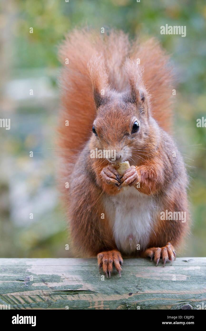 Amateur-Eichhörnchen Mädchen Niglische Pornoröhren