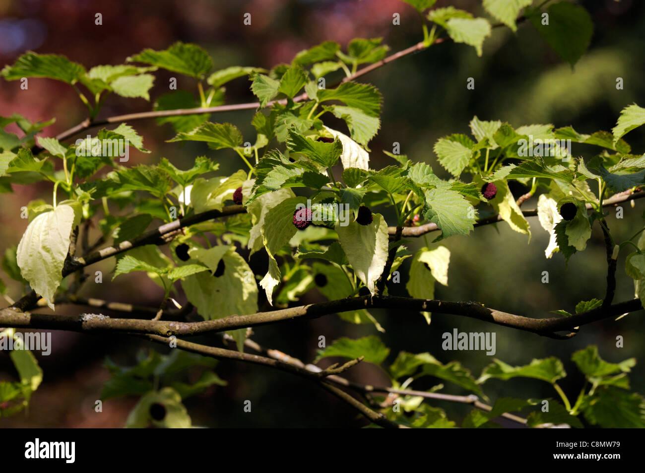 Berühmt Blätter Zu Färben Fotos - Beispielzusammenfassung Ideen ...
