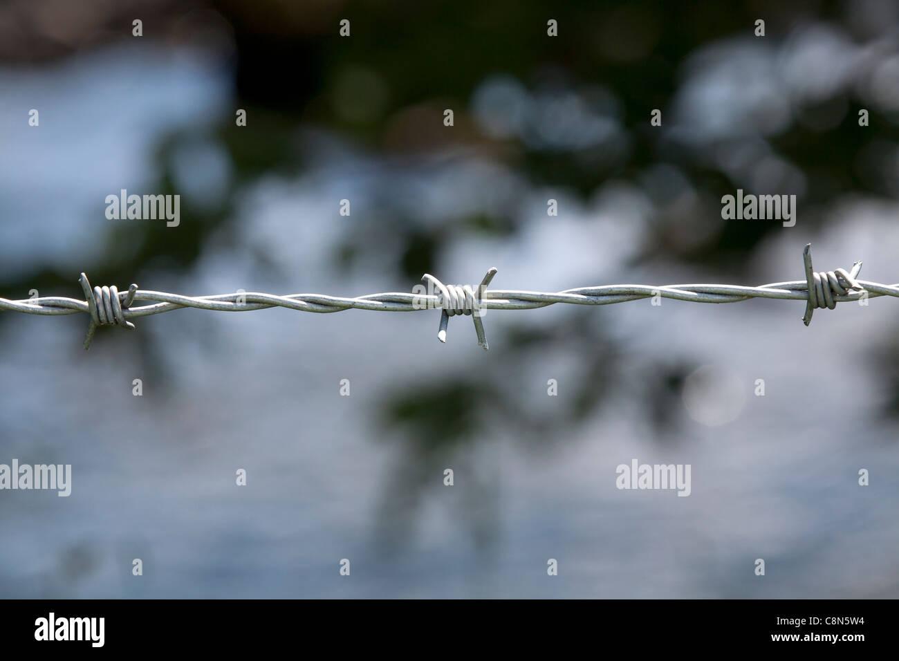 Nahaufnahme des Stranges aus Stacheldraht mit Fokus-Hintergrund Stockfoto