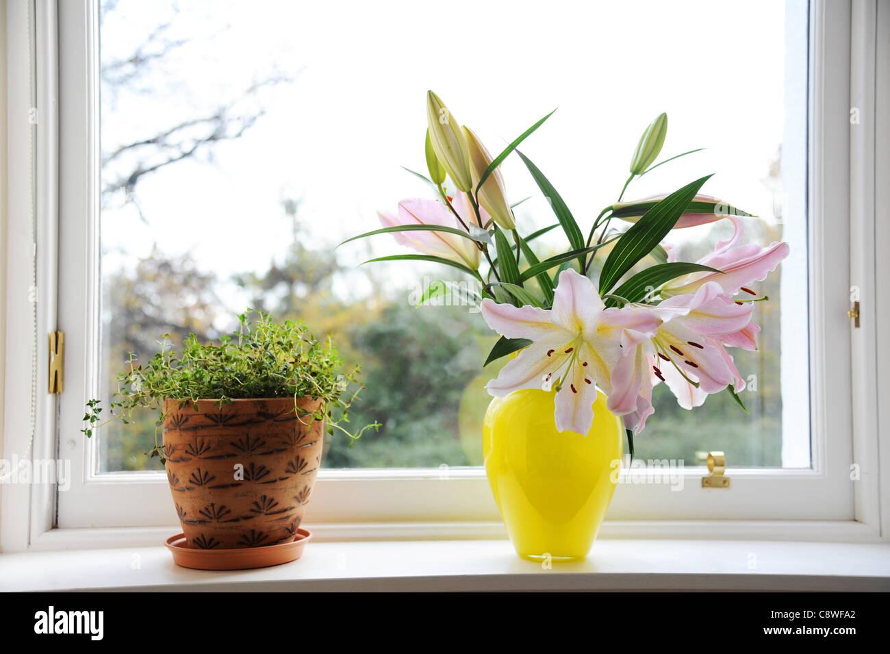 Fensterbank mit Topf Thymian und Vase mit Lilien. Stockbild