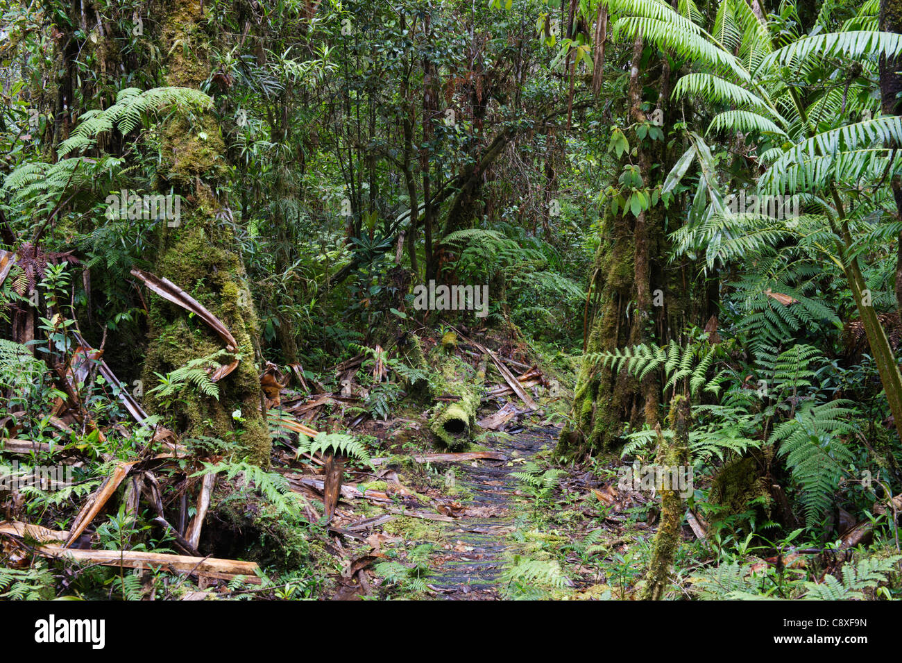 Montane Regenwald rund um Mt Hagen im westlichen Hochland von Papua-Neu-Guinea Stockbild