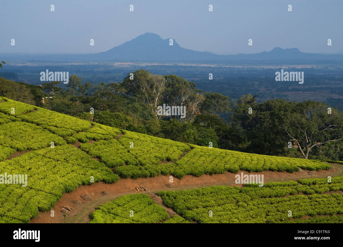 mozambique agriculture stockfotos mozambique agriculture bilder alamy. Black Bedroom Furniture Sets. Home Design Ideas