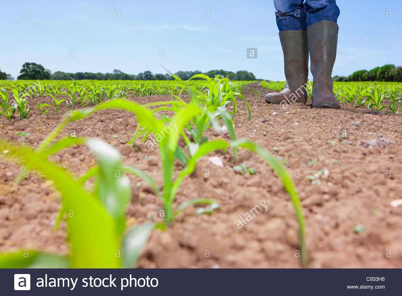Landwirt in Gummistiefel stehen im Feld mit Mais Sämlinge Stockbild