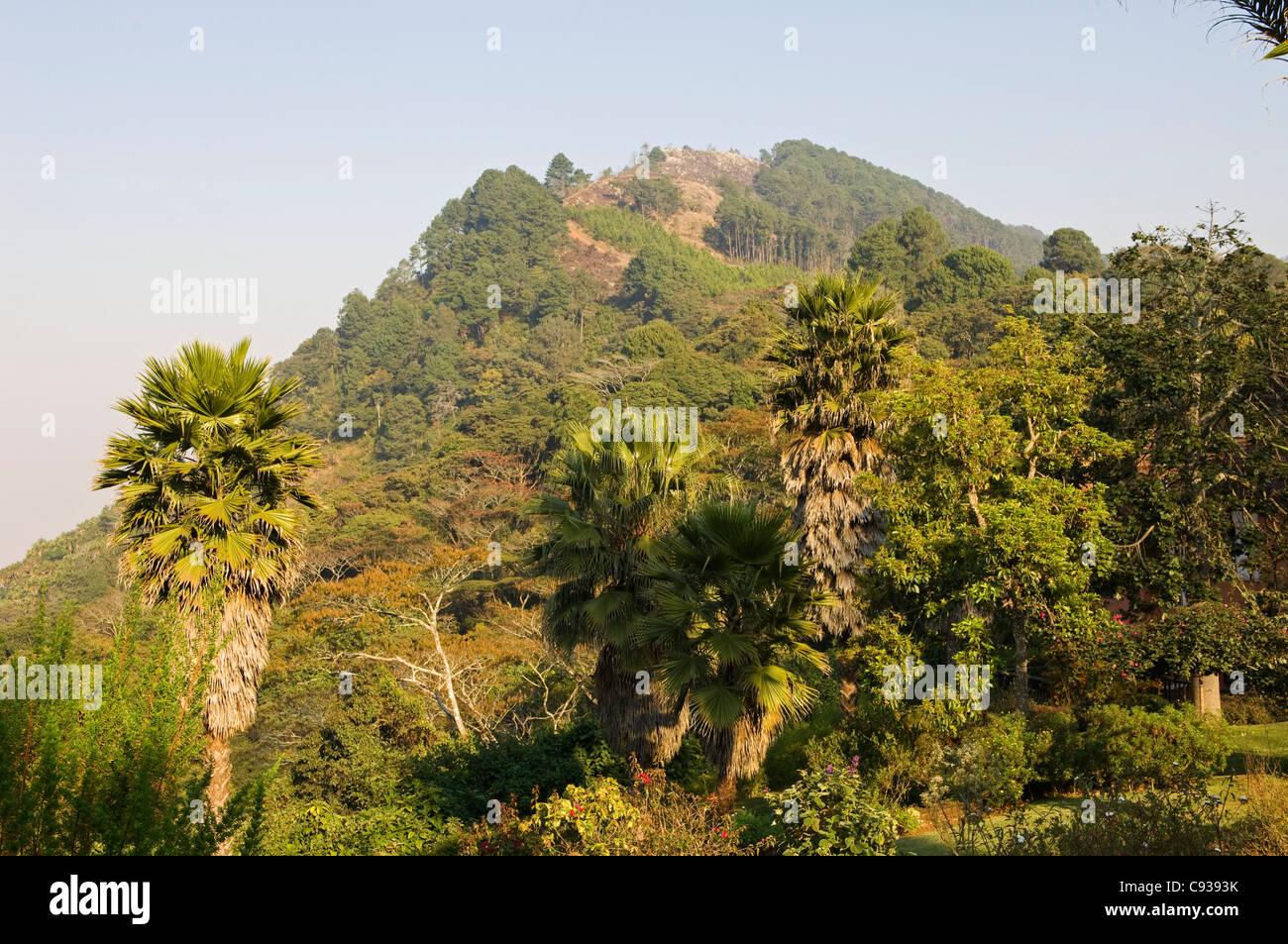 Malawi, Zomba.  Blick von den exotischen Gärten des Ku Chawe Inn in Richtung Zomba Mountain. Stockbild
