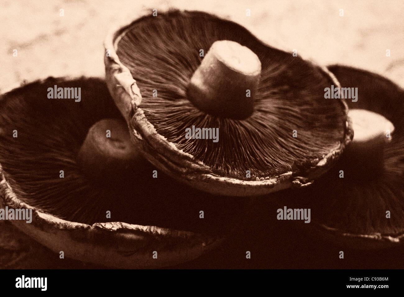 drei Pilze in sepia Stockbild