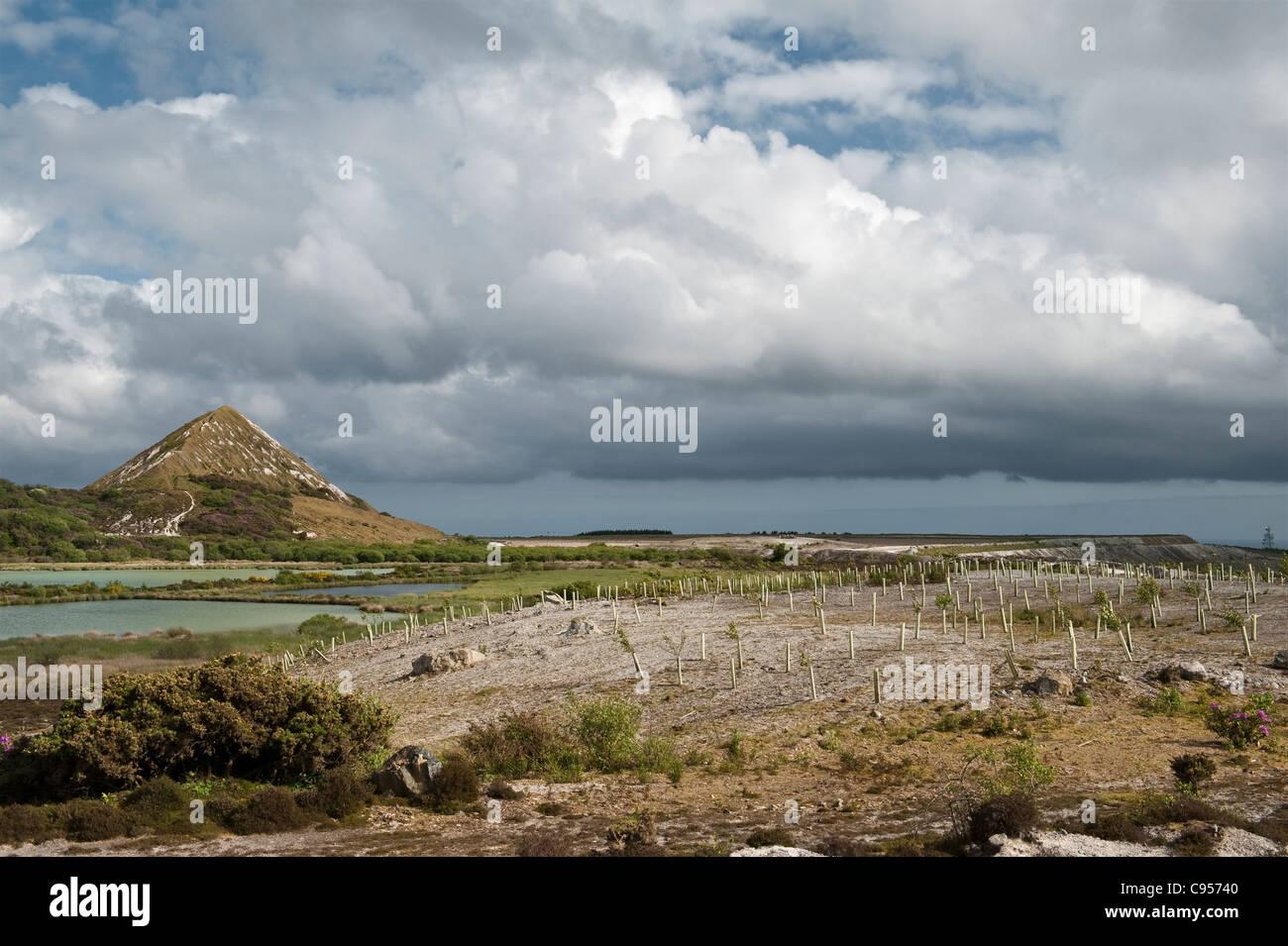 China Lehmgrube und verwöhne häufen oben St Austell, Cornwall, UK. Setzlingen wurden gepflanzt, um die Stockbild