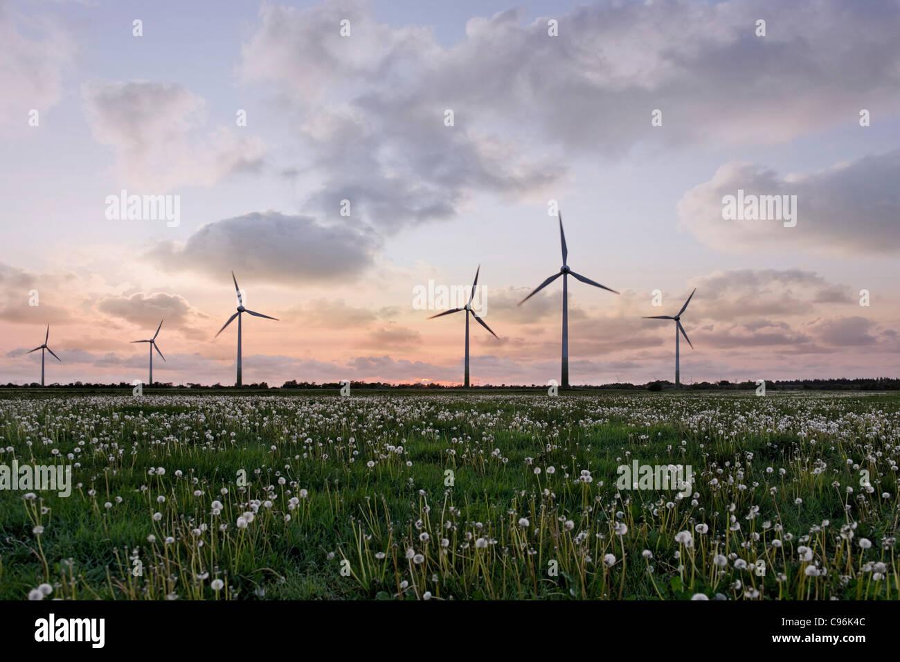 Windkraftanlagen, Silhouette von Windkraftanlagen im Sonnenuntergang, Windkraftanlage, Felder, Windpark Stockbild