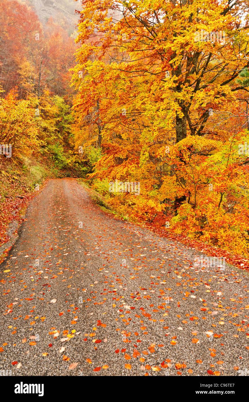 Herbst-Szene von Straße mit Laub unter den Bäumen Stockbild
