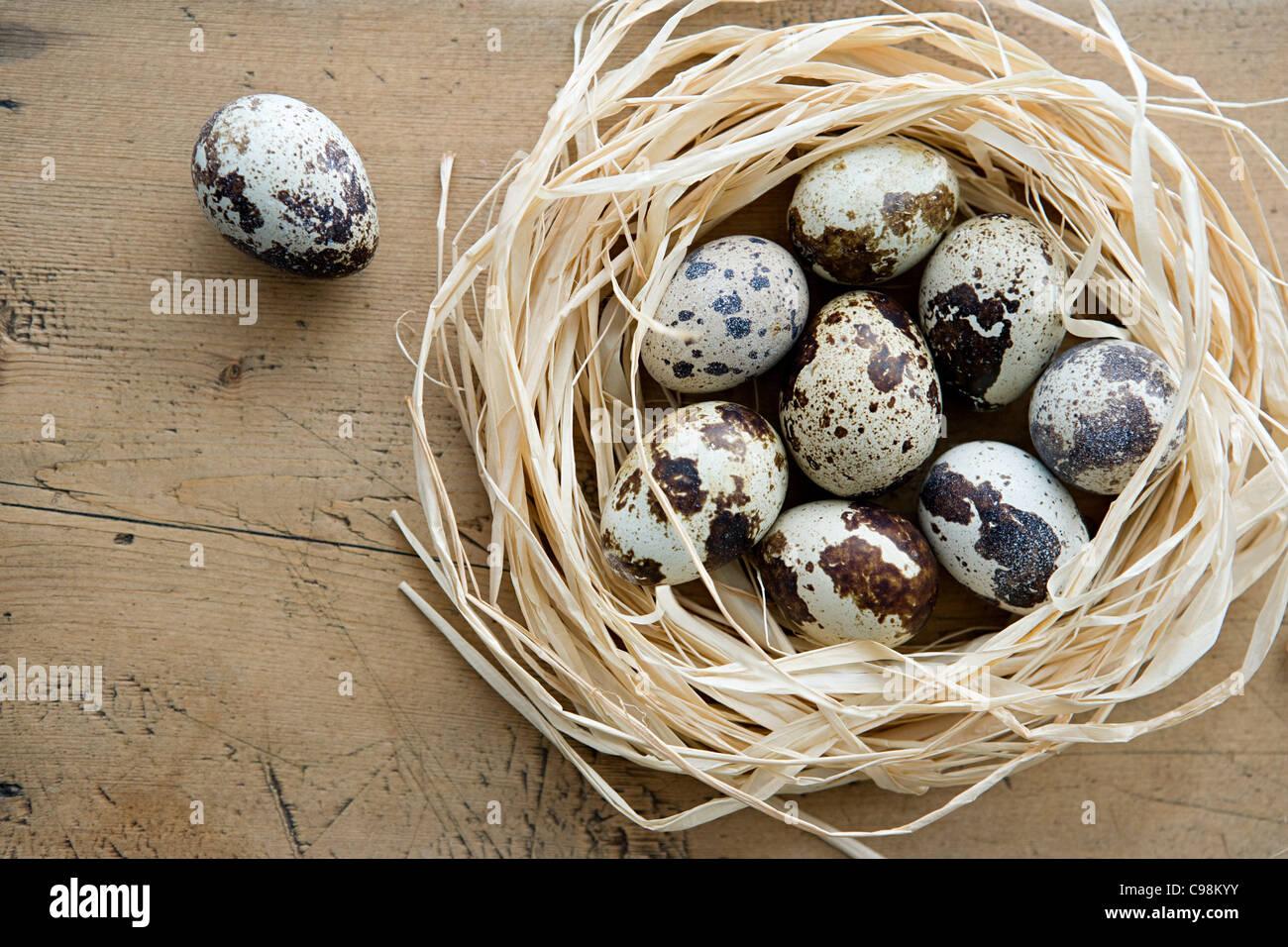 Ein Nest Wachteln Eiern mit einem allein Stockbild