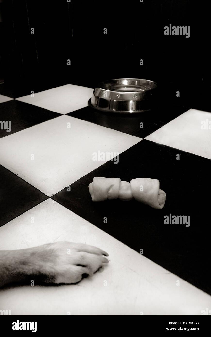 Hund Pfote Schüssel und zähe Knochen mit Hund im schwarz-weiß karierten Stock Stockbild