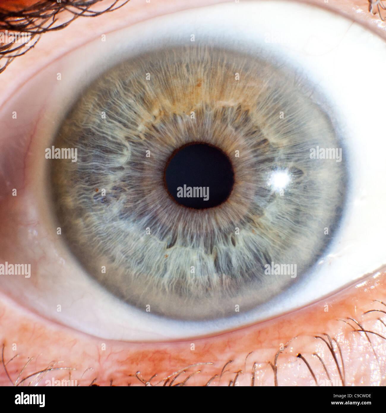 Makroaufnahme einer Auge Ball Iris und Pupille Stockbild