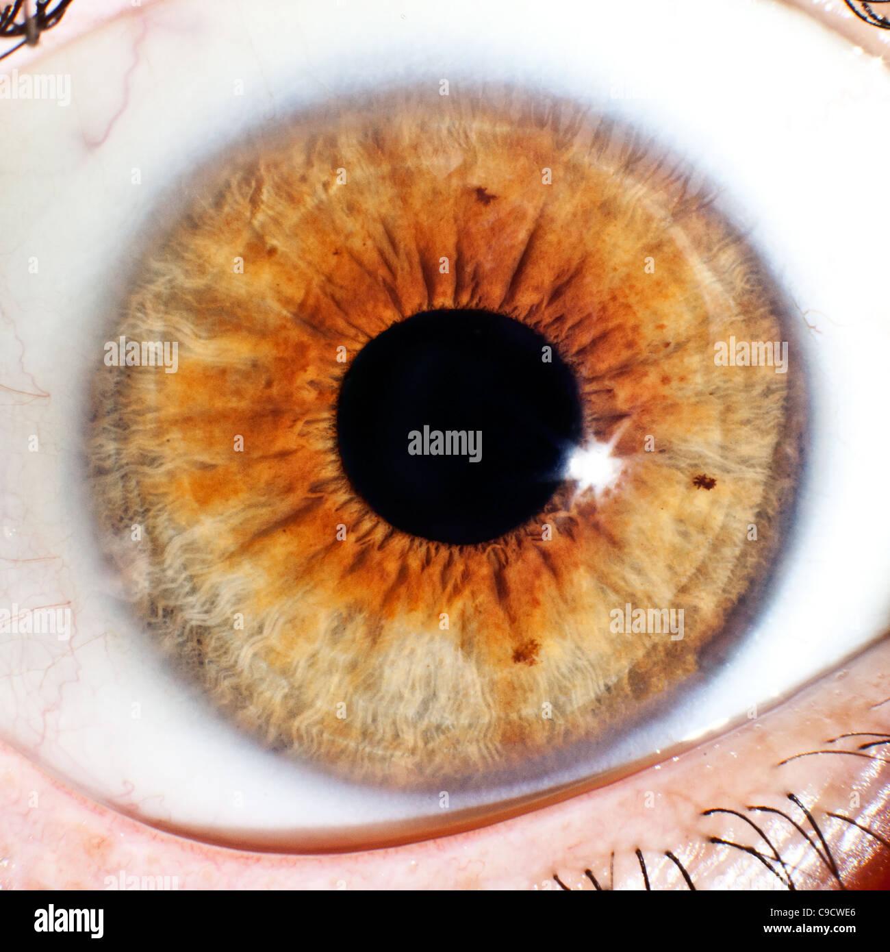 Nahaufnahme Makro von Auge Ball Iris und Pupille Stockbild