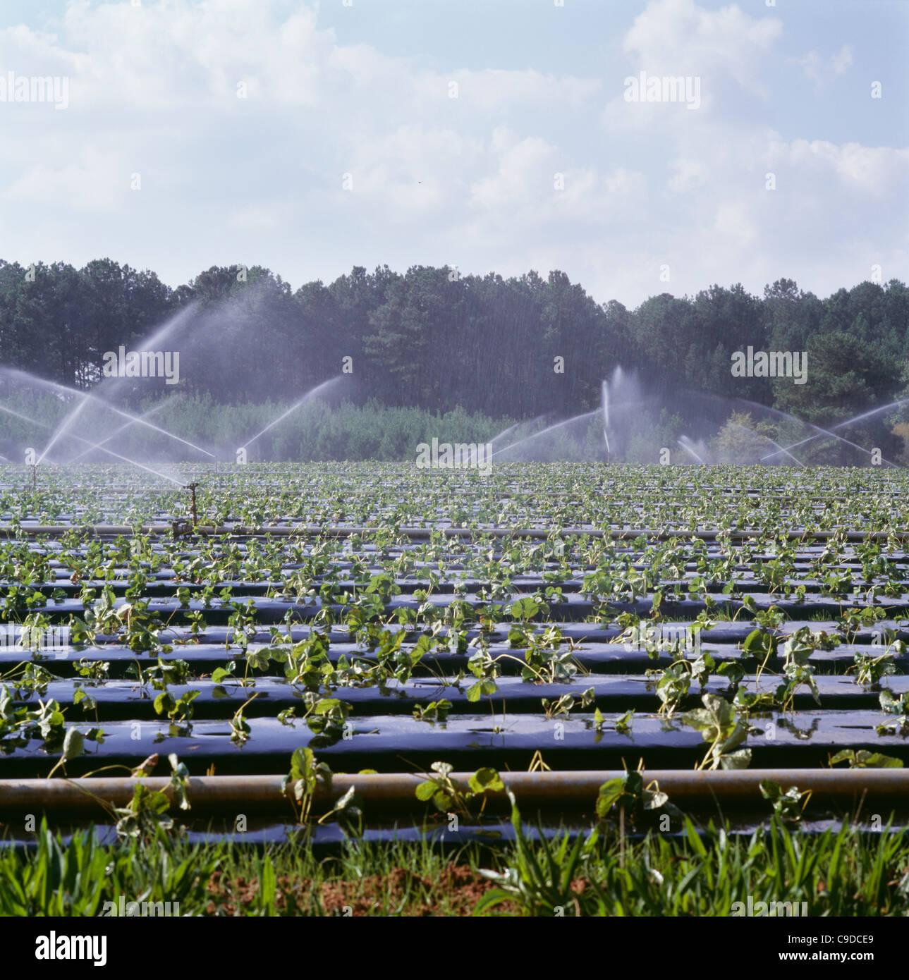 Bewasserung Auf Hochbeeten Mit Kunststoff Uberzogen Neu Erdbeeren
