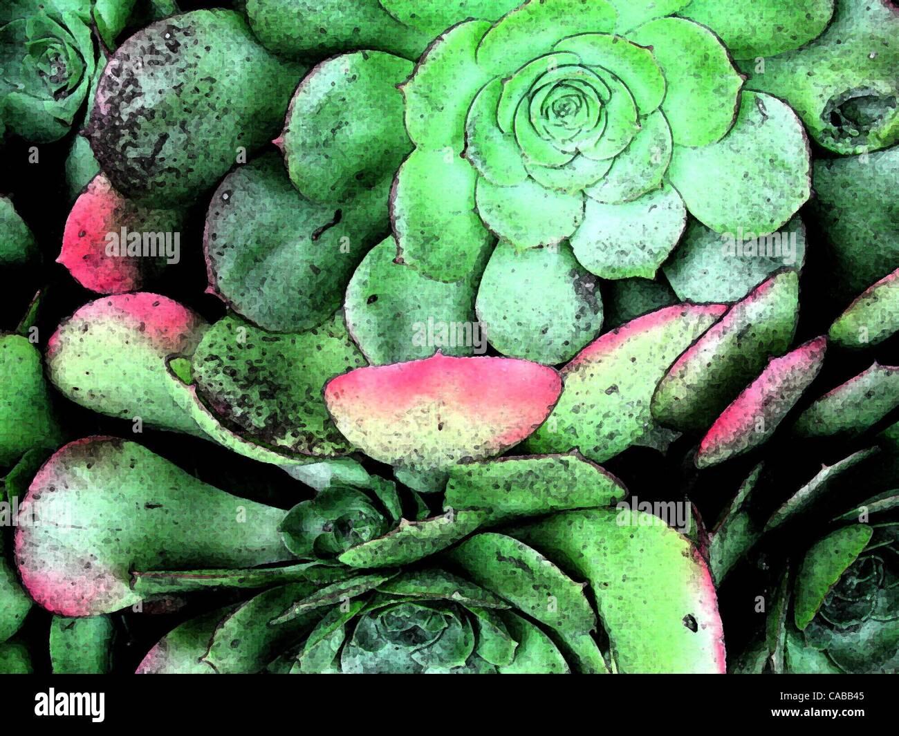 3. Juni 2004; Los Angeles, Kalifornien, USA; Saftige Grünpflanzen. Stockfoto