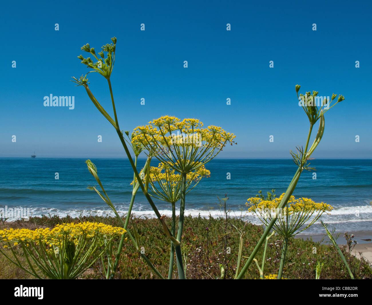 fennel landscape stockfotos fennel landscape bilder alamy. Black Bedroom Furniture Sets. Home Design Ideas