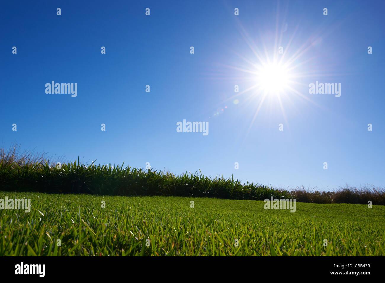 Saftig grünen Rasen sonnigen blauen Himmel Stockbild