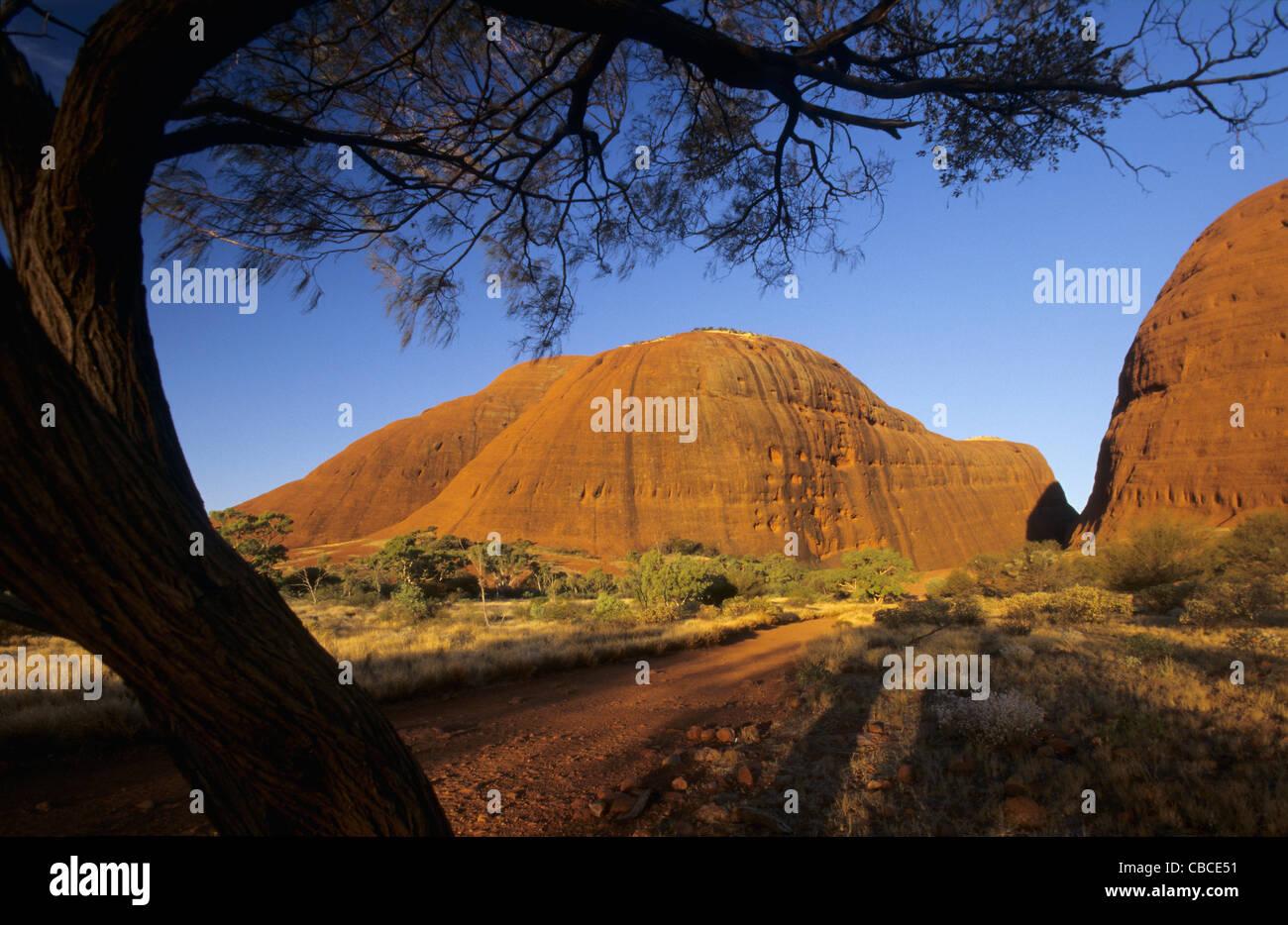 Olgas Reittiere Kata Tjuta, Northern Territory, Australien Stockfoto