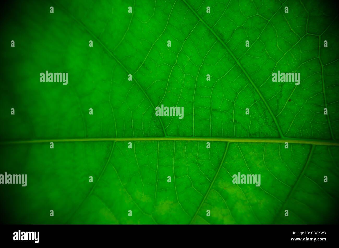 Detaillierte Nahaufnahme von grünen Blatt. Ideal für einen Hintergrund oder Textur. Stockfoto