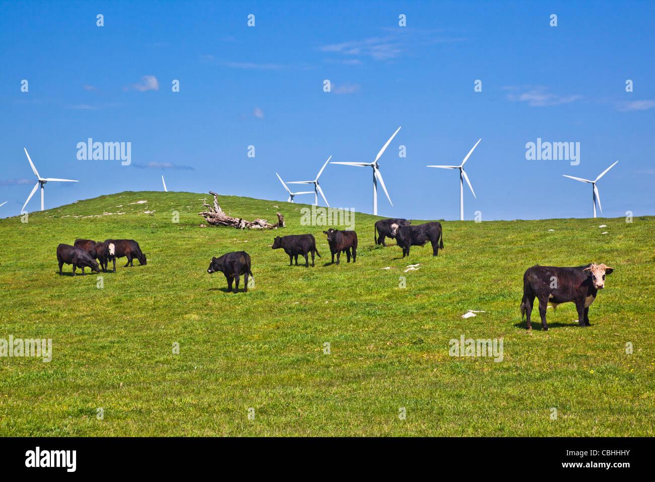 Australien, South Australia, Millicent, Woakwine Palette Windpark Stockbild