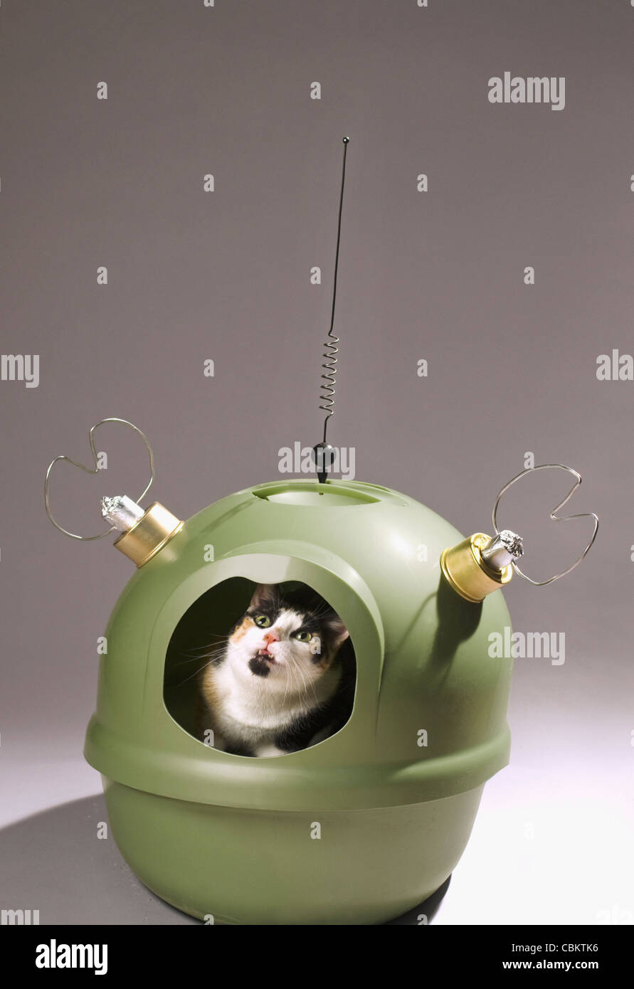 Katze starrte aus Katzenklo mit Antennen befestigt Stockbild