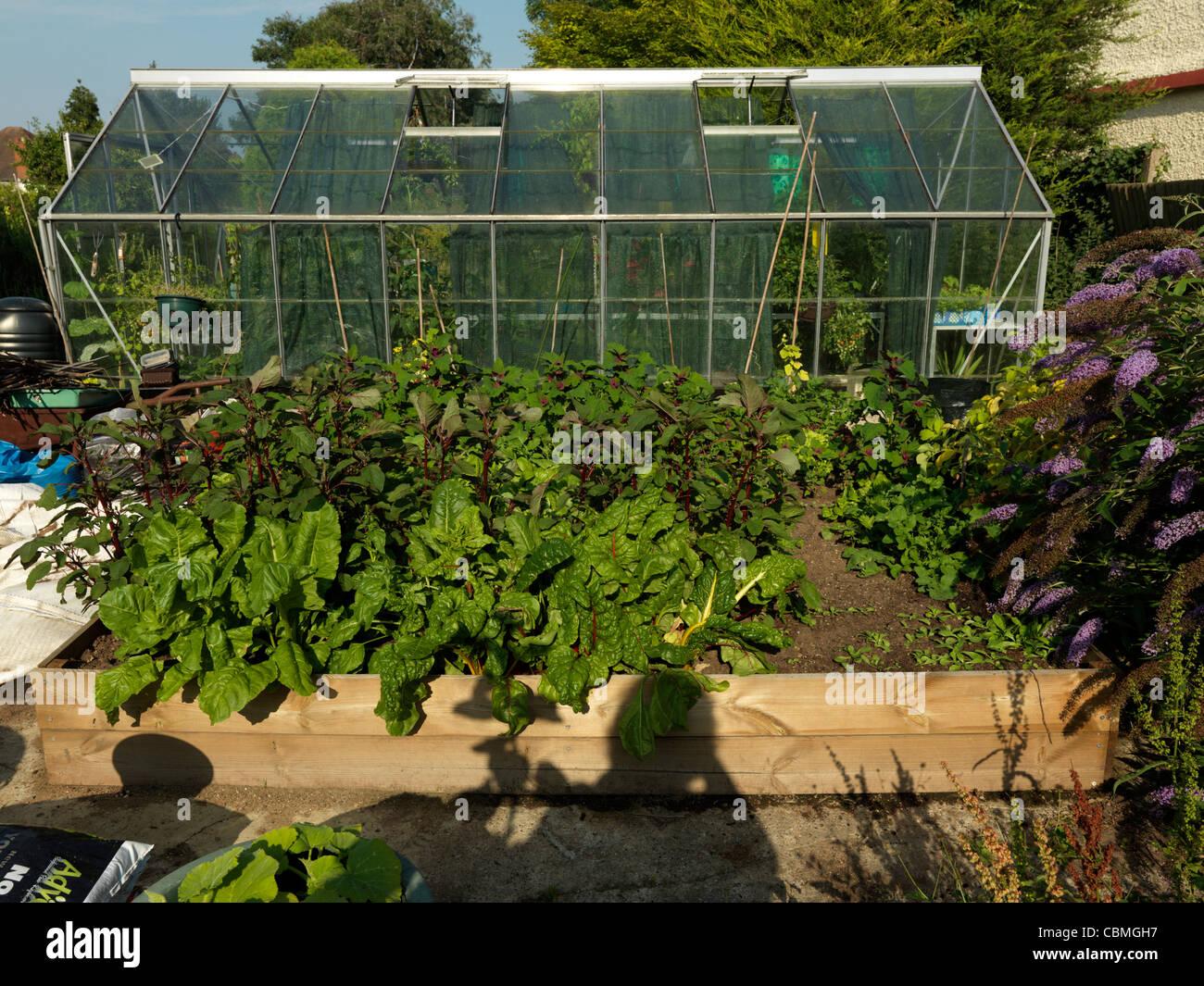 Hochbeet Mit Salat Spinat Mangold Und Pastinake Im Garten Surrey