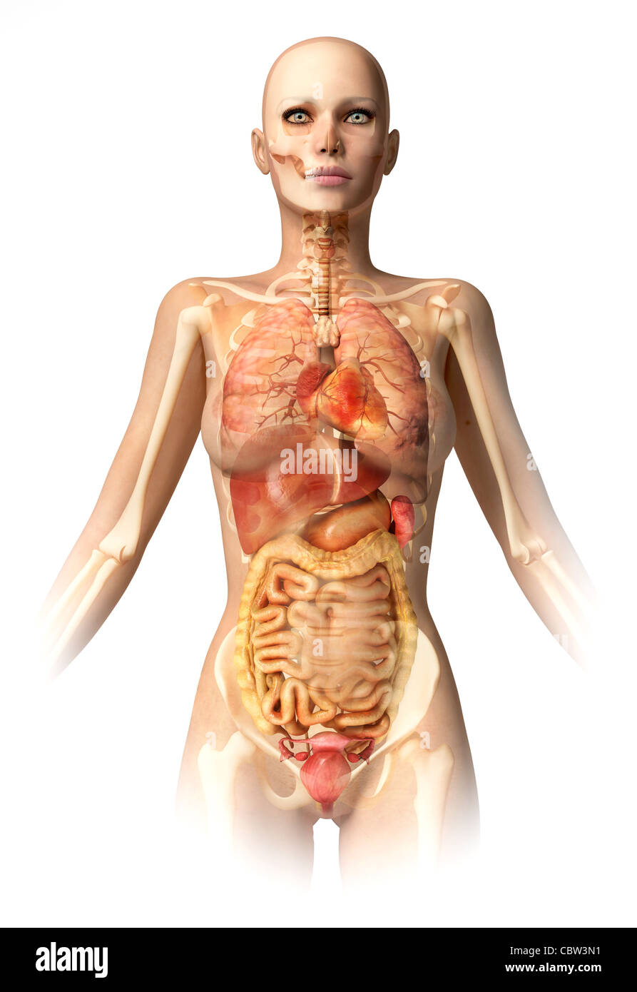 Körper der Frau, mit Knochen Skelett und alle inneren Organe überlagert. Mit Clipping-Pfad enthalten. Anatomie-Bild. Stockfoto