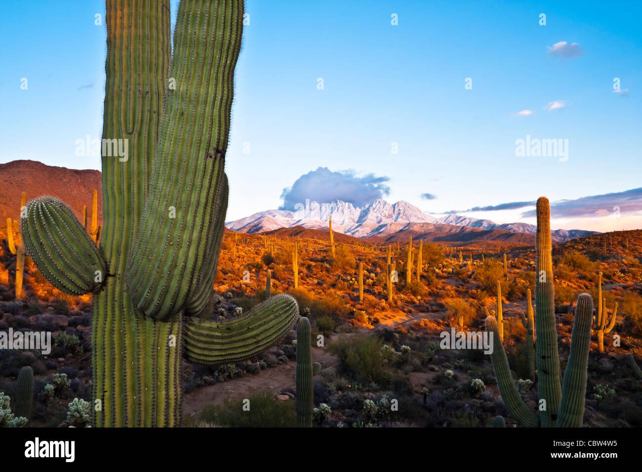 Vier Gipfel (Yavapai: Wikopa, 7657 Füßen (2335 m) in der Höhe, ist ein Wahrzeichen am östlichen Horizont von Phoenix. Stockfoto