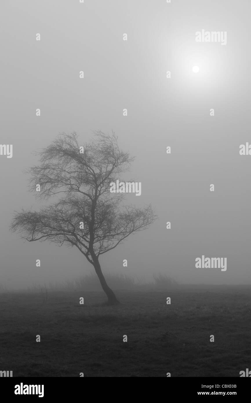 Geheimnisvolles späten Herbst Licht leuchtet durch einen nebligen Feld in der Nähe von Blubberhouses in Stockbild