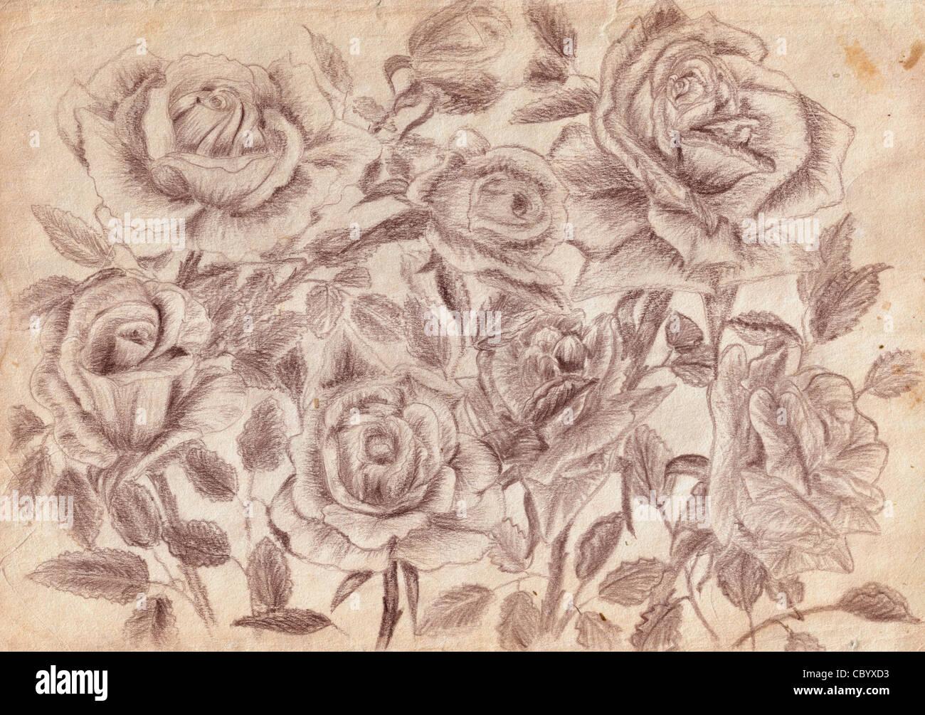 Rosen Auf Dem Alten Gelben Papier Mit Bleistift Zu Zeichnen