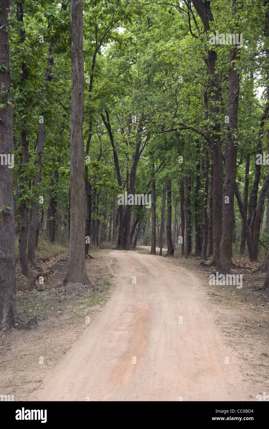 Bandhavgarh National Park, Indien Stockbild