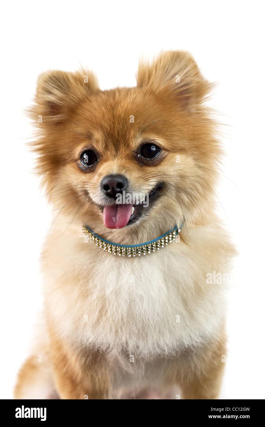 Ungewöhnlich Malvorlagen Von Niedlichen Hunden Fotos - Beispiel ...
