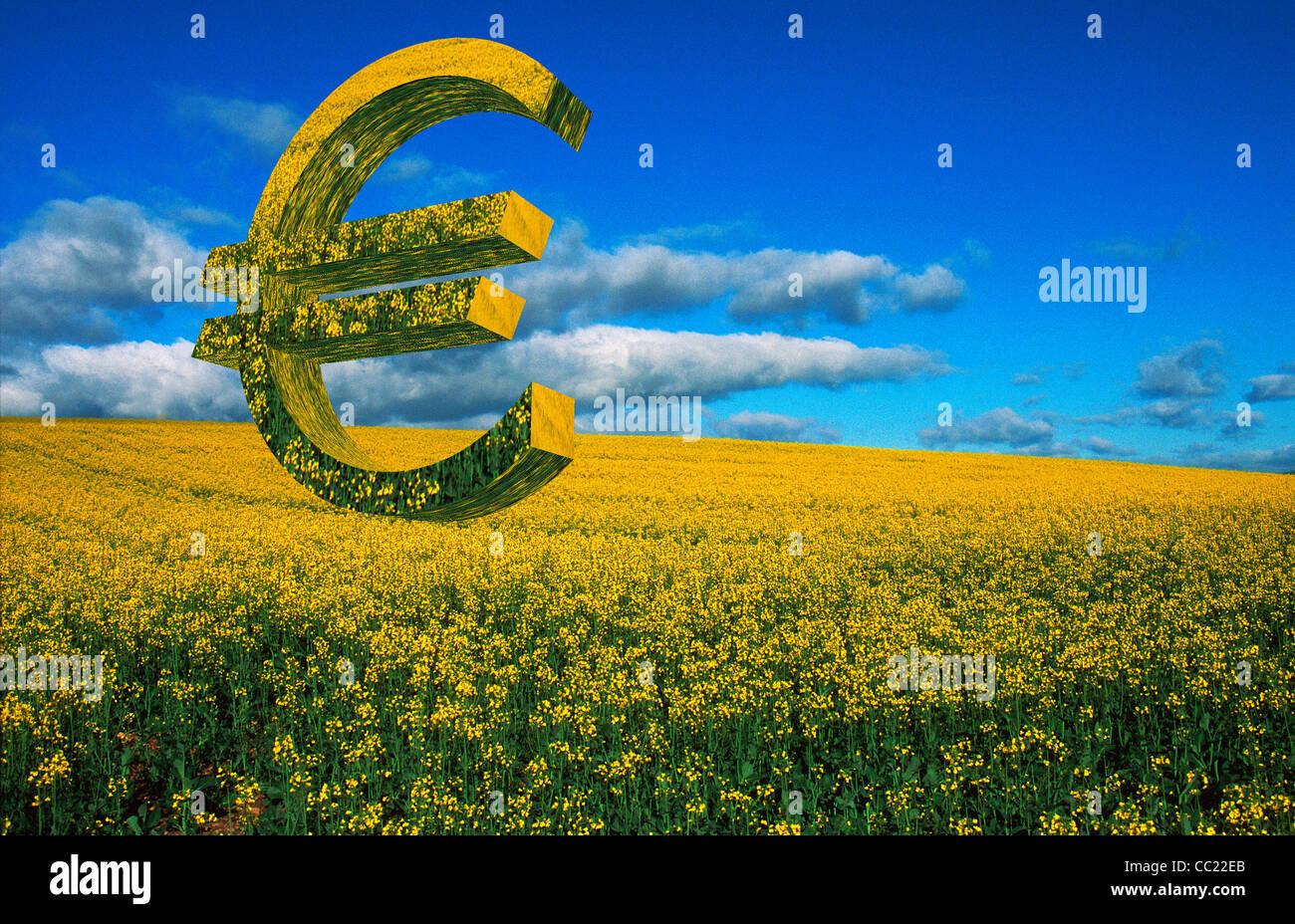 Euro-Zeichen in einem Feld von Raps Raps - EU-Landwirtschaft / Politik / Subventionen / Business / Landwirtschaft Stockbild
