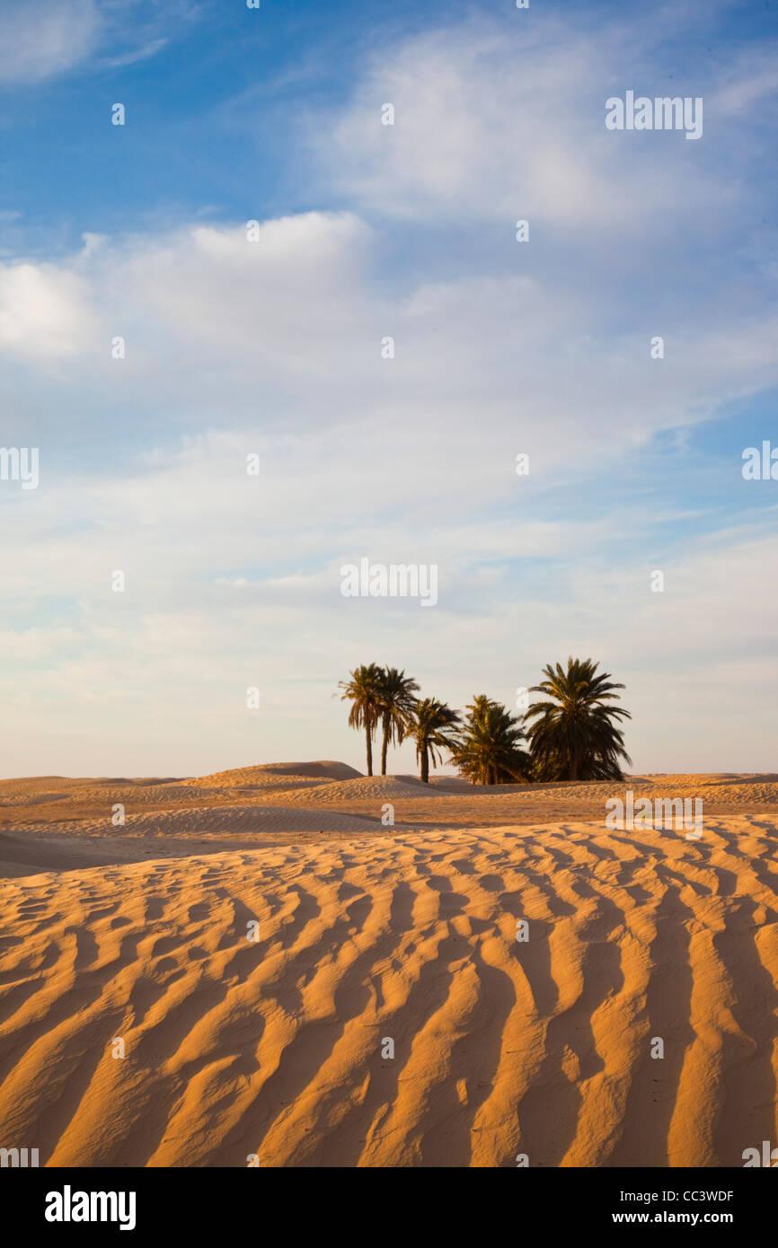 Tunesien, Sahara Wüste, Douz, große Düne Stockbild