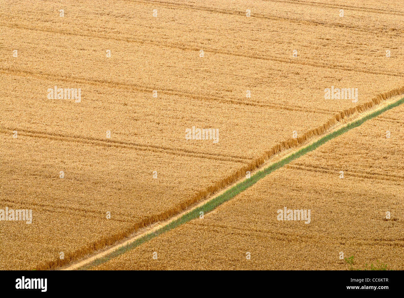 Wanderweg durch Bauern Feld, (North Downs Way), Kent, England, uk Stockfoto