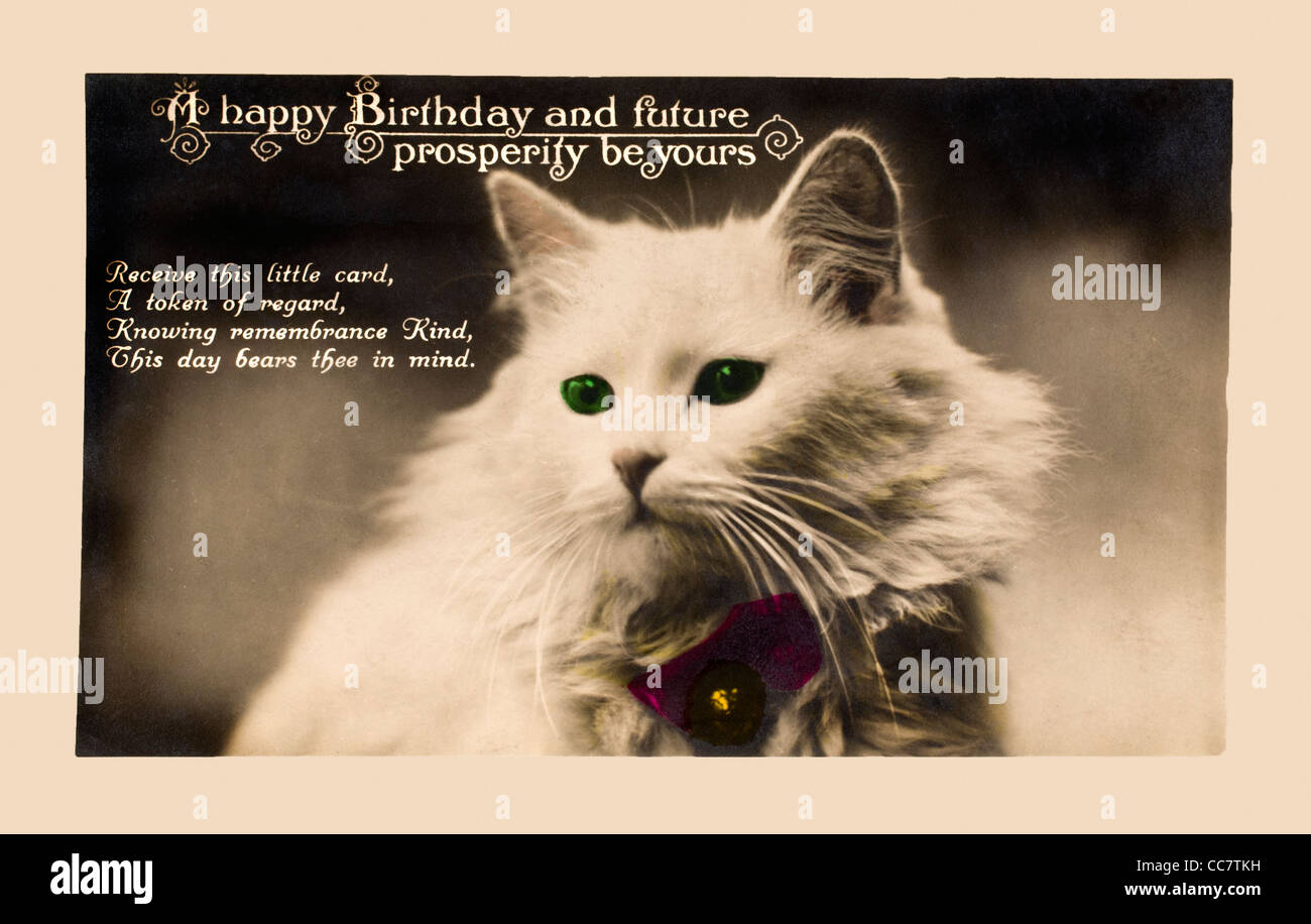 20er Jahre Geburtstagskarte in Form einer Postkarte. Weiße Katze