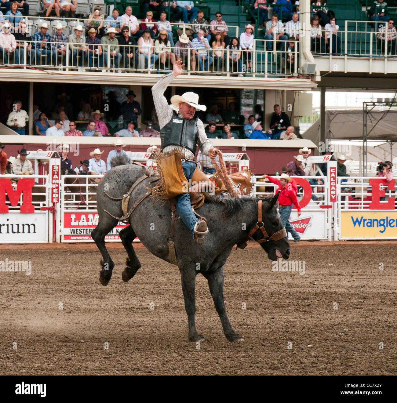 Bareback Rodeo Event bei der Calgary Stampede in Kanada Stockbild