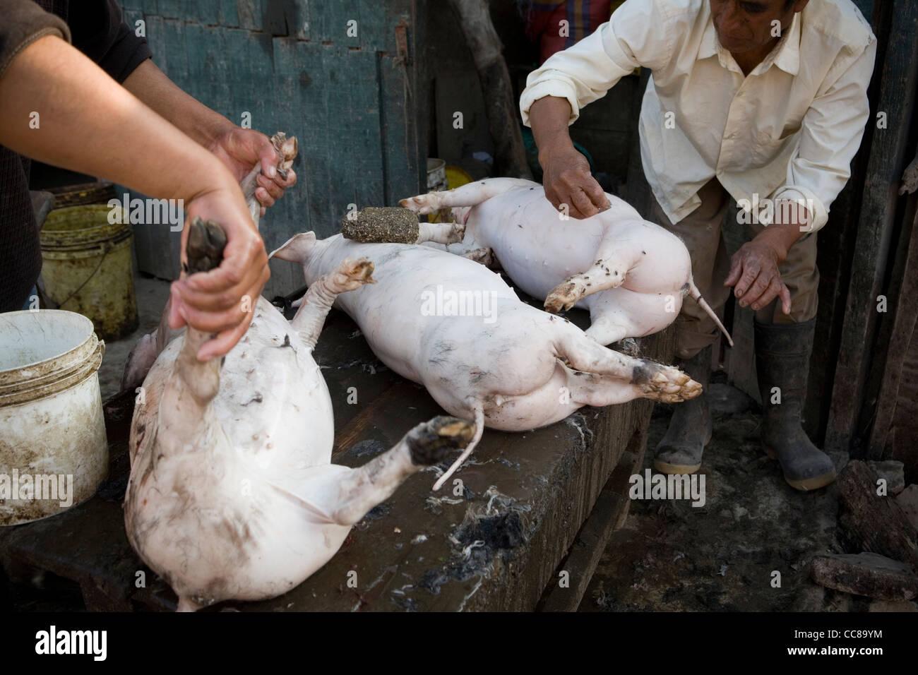 Arbeiter reinigen Schweine, die in einem Schlachthof in Lima, Peru, Südamerika. Stockbild