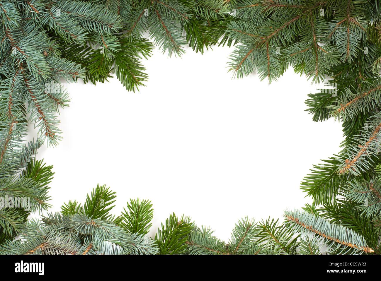 Tanne Zweig Frame auf weißem Hintergrund Stockbild