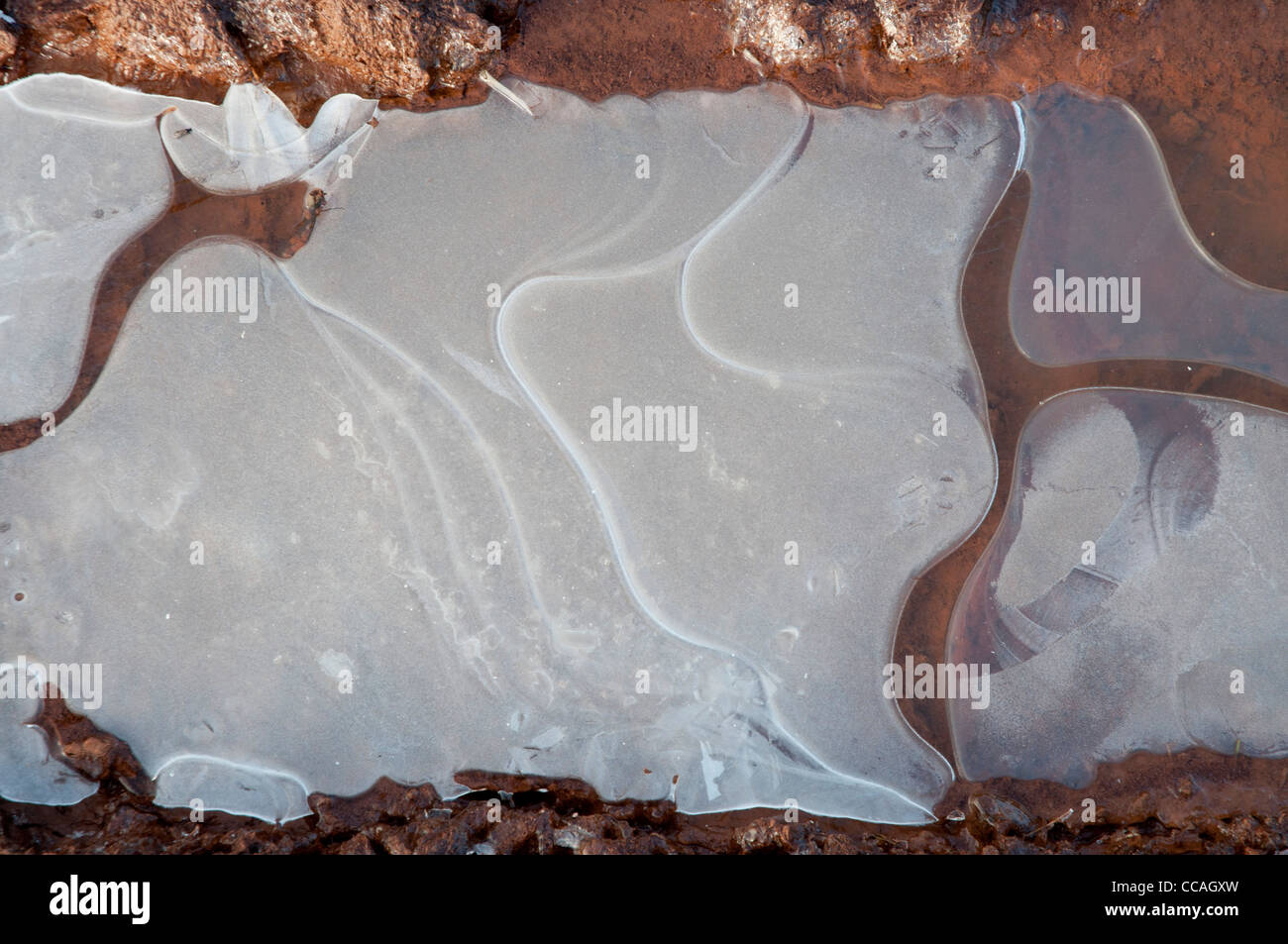 Gefrorenes Wasser Pfütze im Schlamm Stockbild
