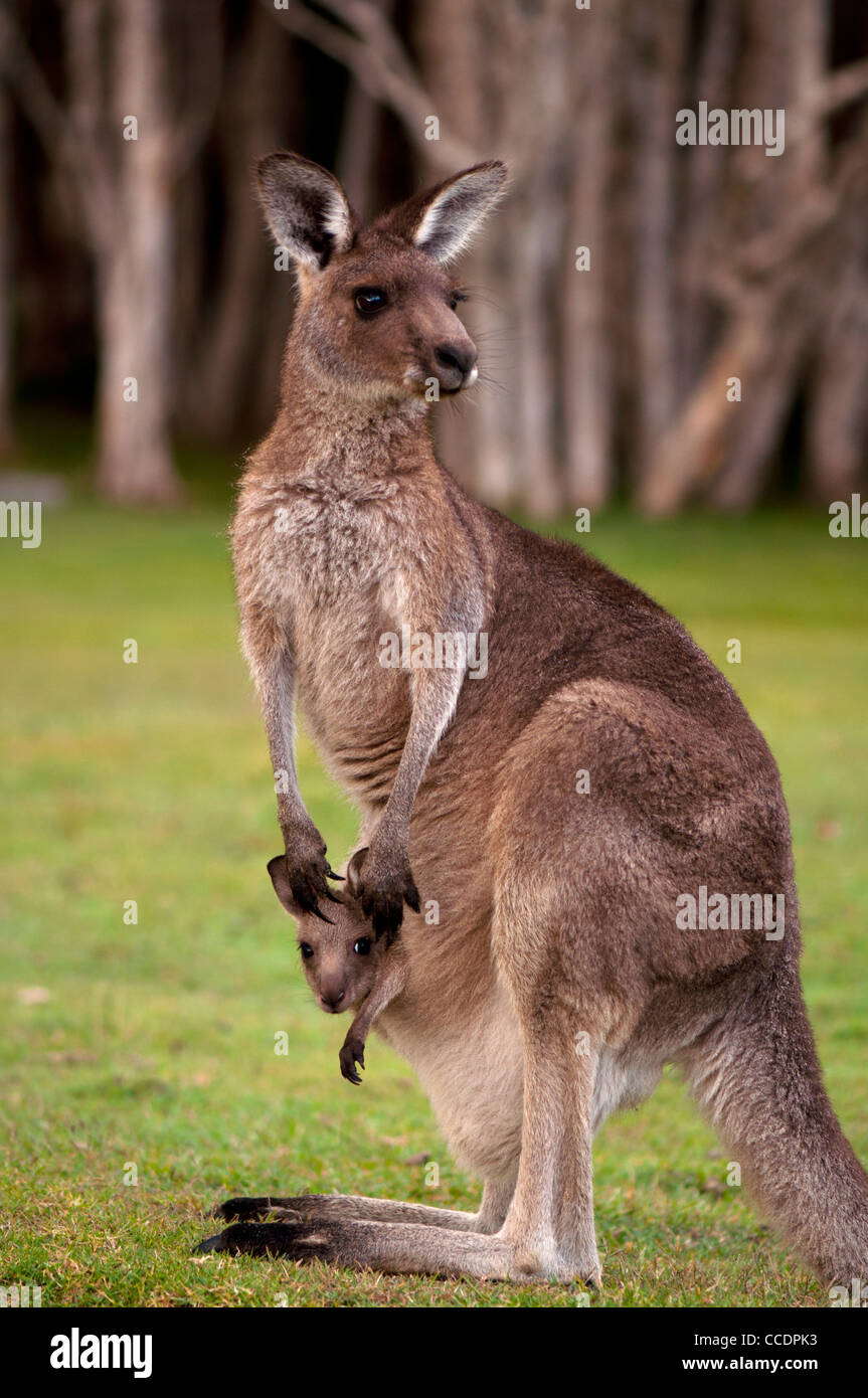 Kangaroo Island Victoria