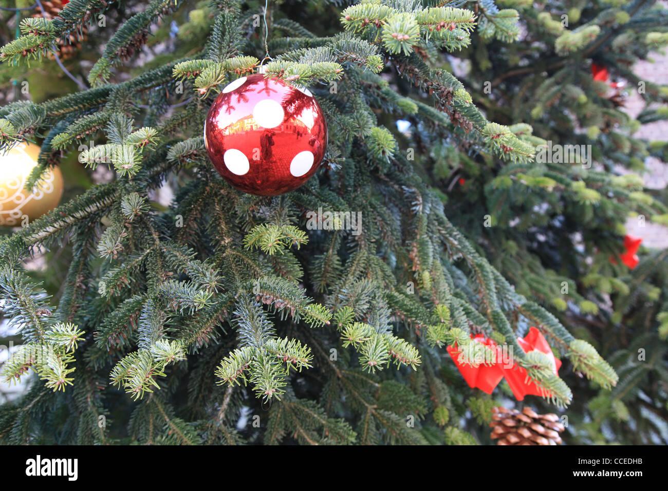 Weihnachtsbaum Tannenzapfen Tanne Kegel Tannenzapfen